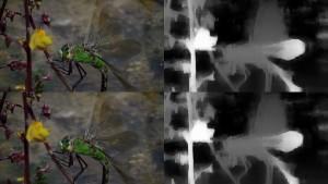 dragonfly-22dz